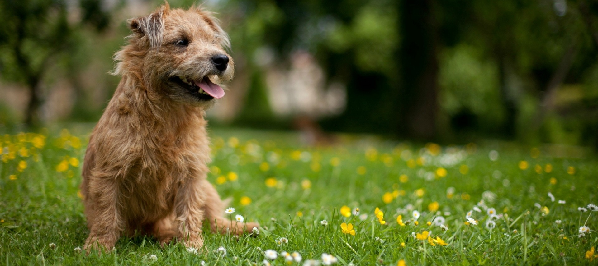 dog_in_grass_field1